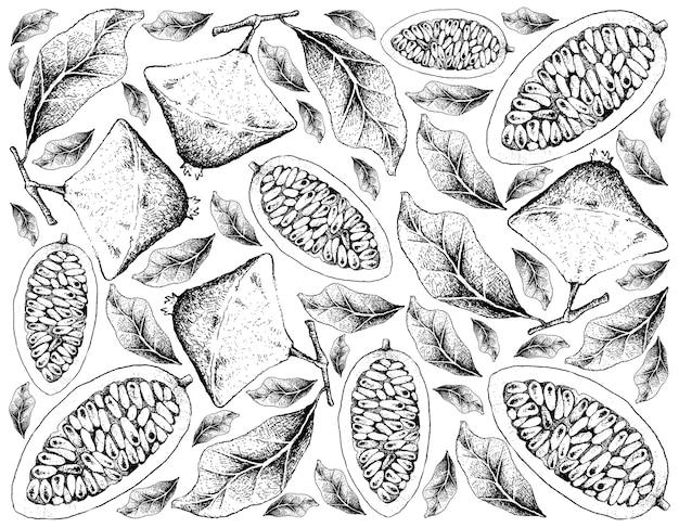 Fundo de mão desenhada de cambuci e banana maracujá