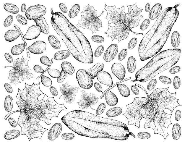 Fundo de mão desenhada de datas e frutos de mamão babaco