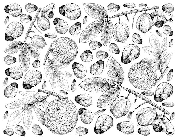 Fundo de mão desenhada de frutas ackee e fruta-pão