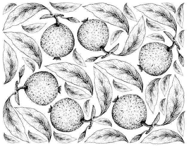 Fundo de mão desenhada de frutas borojo ou alibertia patinoi