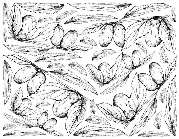 Fundo de mão desenhada de frutas de data chinesa