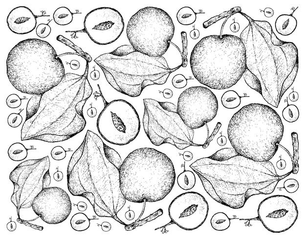Fundo de mão desenhada de frutas de jujuba indiana