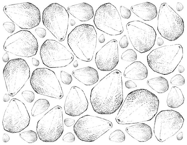 Fundo de mão desenhada de frutas frescas cempedak
