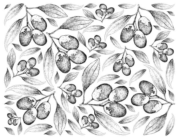 Fundo de mão desenhada de frutas frescas de jujuba