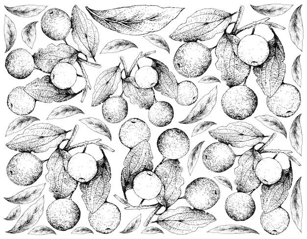 Fundo de mão desenhada de frutos de espinho de búfalo