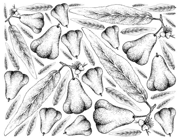 Fundo de mão desenhada de java rose maçãs