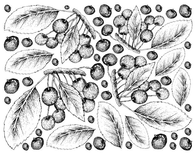 Fundo de mão desenhada skecth de cerejas vermelhas frescas