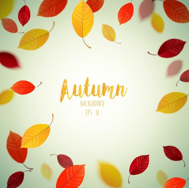 Fundo de outono com folhas de faia a voar