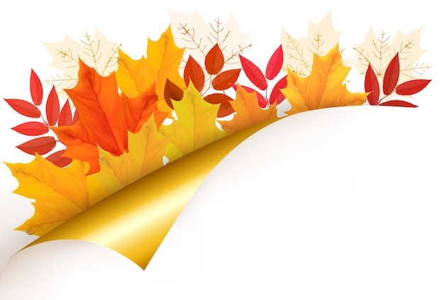 Fundo de outono com folhas. de volta à escola. ilustração.