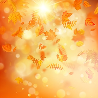 Fundo de outono com folhas naturais e luz solar.