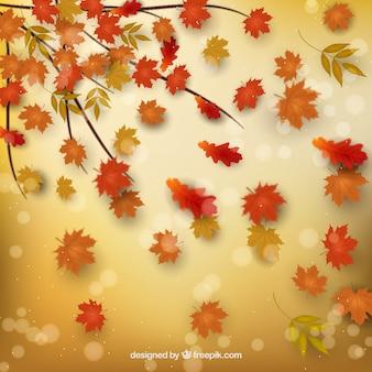 Fundo de outono com folhas secas