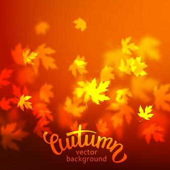Fundo de outono, folhas de bordo vermelho turva sem foco