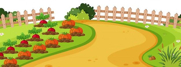 Fundo de paisagem com legumes no jardim