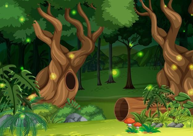 Fundo de paisagem de floresta encantada