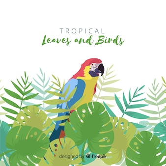 Fundo de pássaro tropical