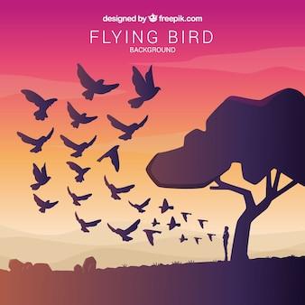 Fundo de pássaro voador ao pôr do sol