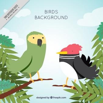 Fundo de pássaros exóticos na selva