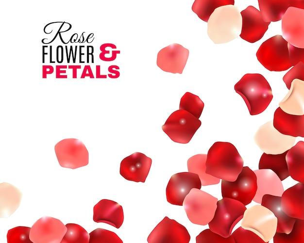 Fundo de pétalas de flores rosa