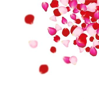 Fundo de pétalas de rosa