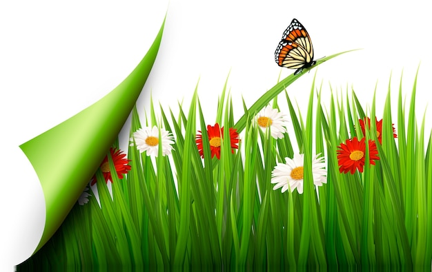 Fundo de primavera com flores, grama e uma borboleta.