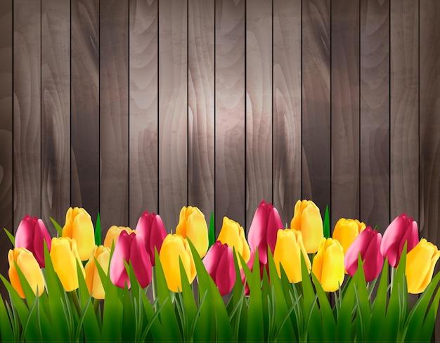 Fundo de primavera de natureza com tulipas coloridas em placa de madeira.