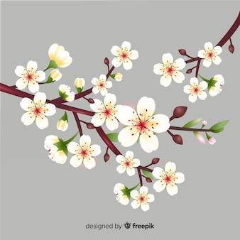 Fundo de ramo de flor de cerejeira realista