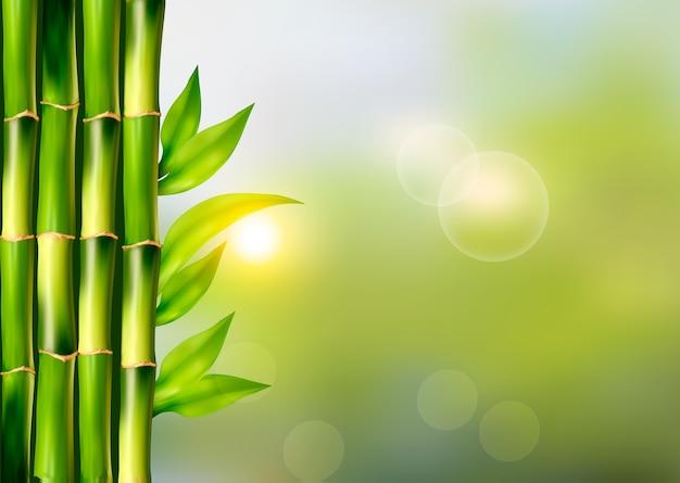 Fundo de spa com bambu.