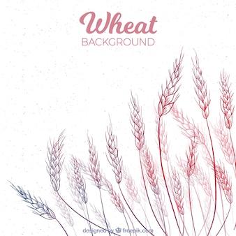 Fundo de trigo desenhado mão