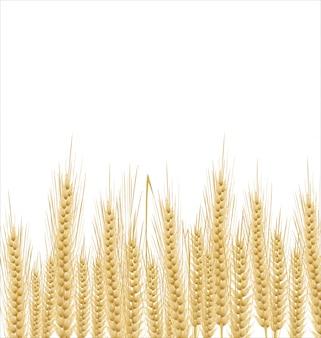 Fundo de trigo