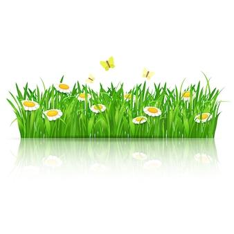 Fundo de verão com grama verde, camomilas e borboletas. ilustração vetorial