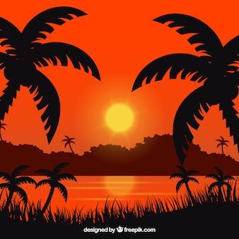 Fundo de verão com pôr do sol e palmeiras