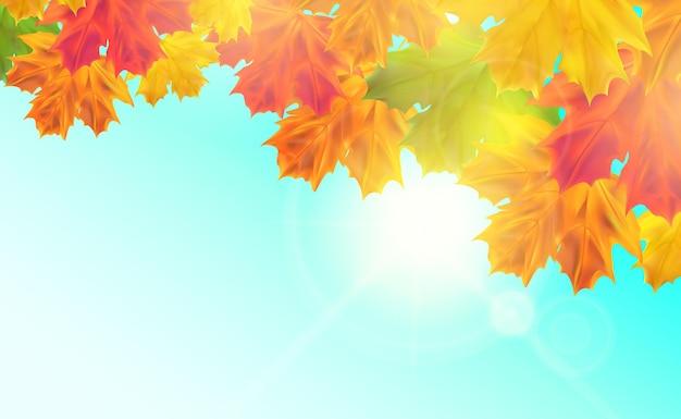 Fundo de vetor de outono realista com folhas folhas de bordo com luz do sol para o banner do pôster