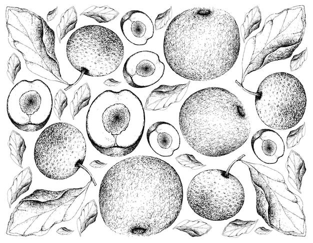 Fundo desenhado à mão de ameixas davidson e peras chinesas