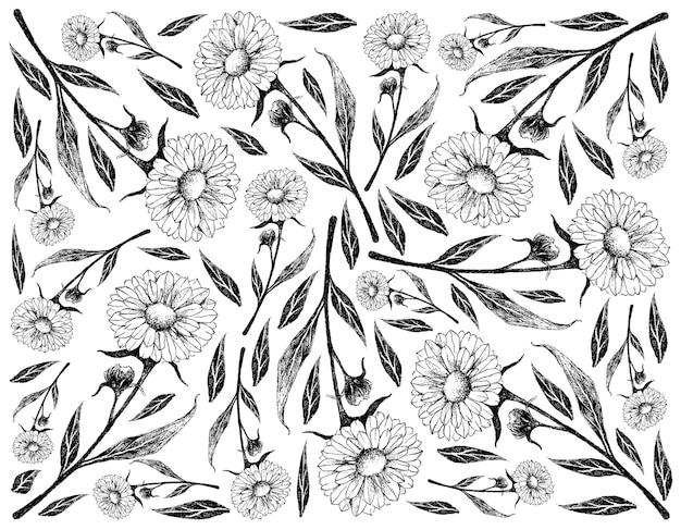 Fundo desenhado à mão de calêndula ou flor de calêndula