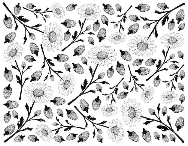 Fundo desenhado à mão de flores de camomila ou camomila