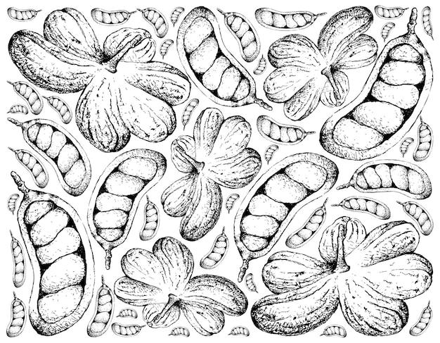 Fundo desenhado à mão de frutas cola millenii