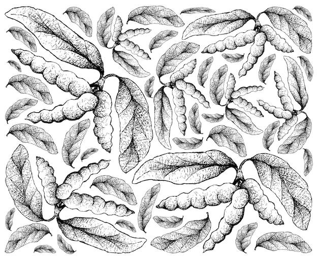 Fundo desenhado à mão de frutas dasymaschalon lomentaceum