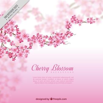 Fundo desfocado com filial e flores de cerejeira