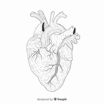 Fundo do coração desenhado mão