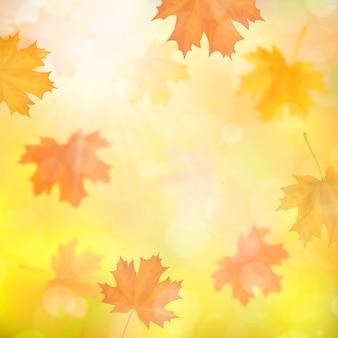 Fundo do outono com as folhas caídas do bordo borrado.