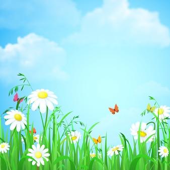 Fundo do verão da mola da natureza com ilustração do céu azul das borboletas de camomila da grama da flor.