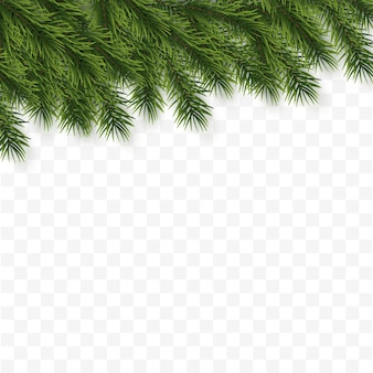 Fundo festivo de natal ou ano novo. galhos de árvore de natal. fundo do feriado.