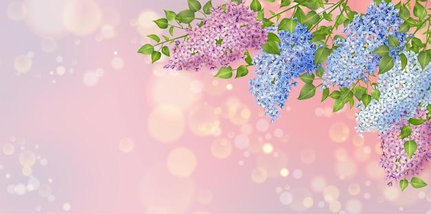 Fundo floral primavera com flores lilás