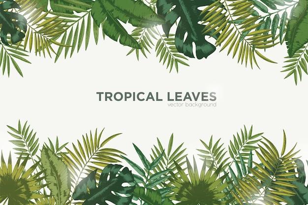 Fundo horizontal com folhas verdes de palmeira tropical, banana e monstera.
