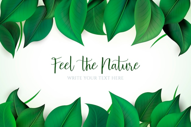 Fundo natural com folhas verdes
