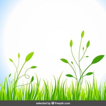 Fundo natural com grama verde