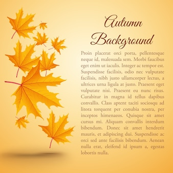 Fundo natural de outono