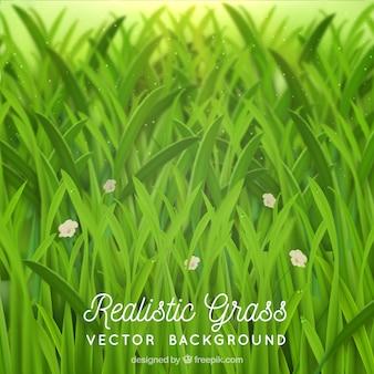 Fundo realista com grama e flores