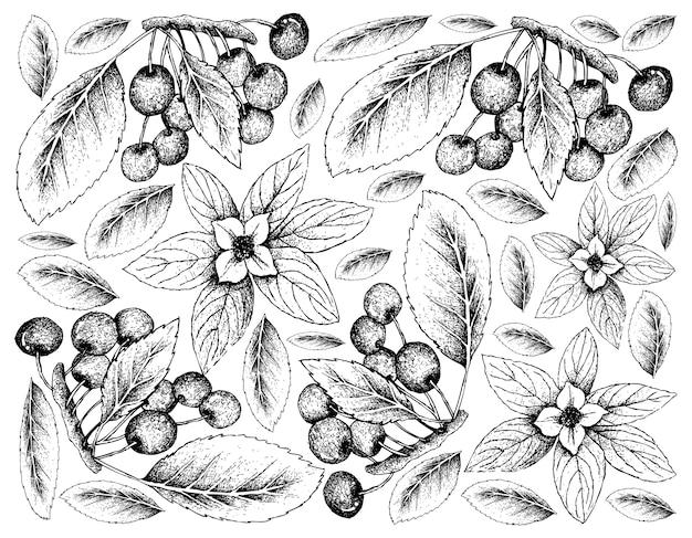 Fundo skecth de bunchberries e cerejas