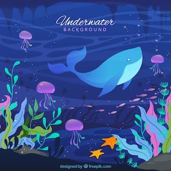 Fundo subaquático com caricaturas de animais aquáticos